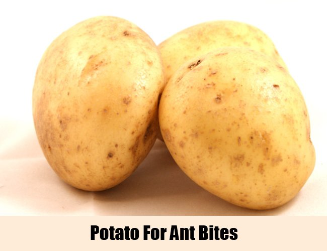 Raw Potato For Ant Bite