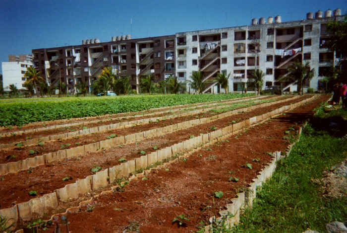 Best American Universities for Studying Sustainable Agriculture