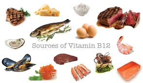 Best Foods Highest In Vitamin B12