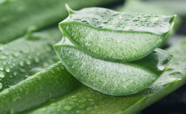 Aloe Vera for Cracked Heels