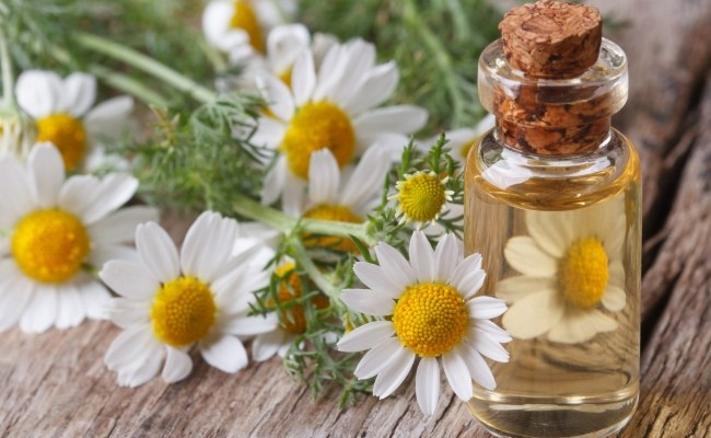 Chamomile Oil for Sinus