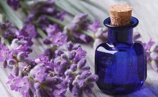 Lavender Essential Oil for Sinus