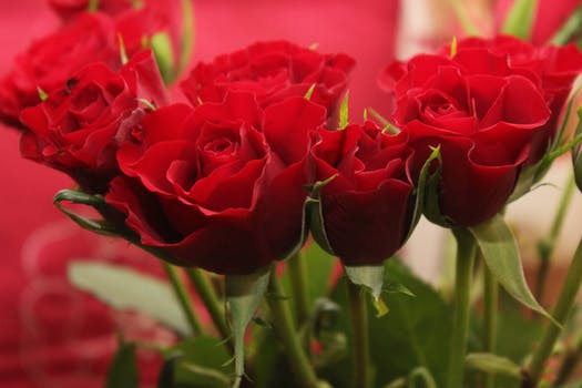 Happy Rose Day Messages, Quotes With Image