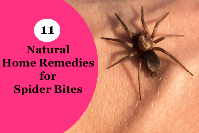 how to treat a spider bite blister