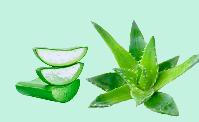 Aloe Vera for Butt Acne