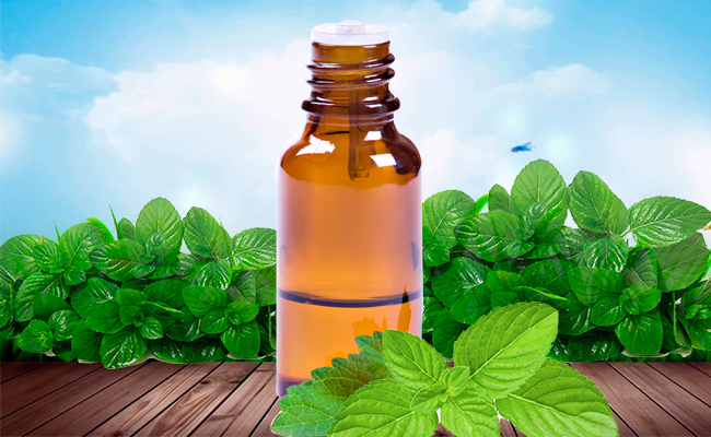 Peppermint for Spider Bites