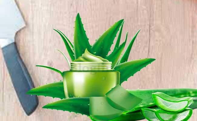 Aloe Vera for Skin Allergies