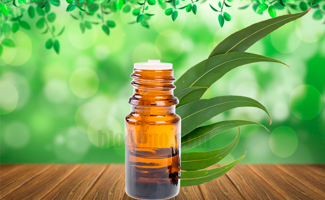 Eucalyptus Oils for Leg Pain