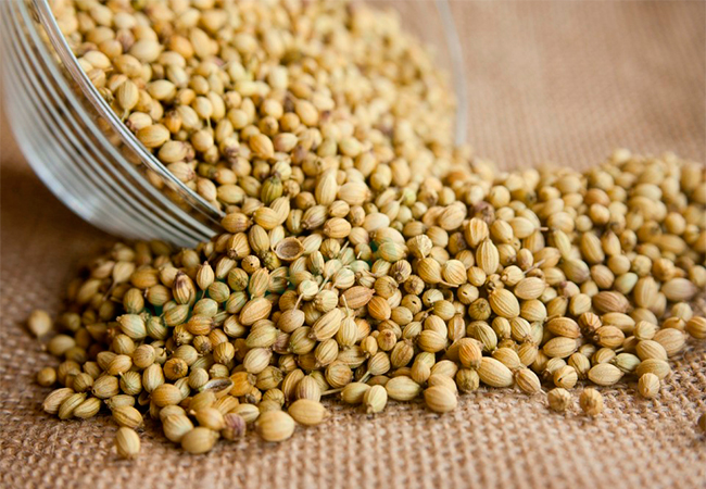 Coriander seeds for white discharge or leucorrhoea