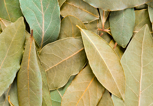 Bay Leaf for asthma