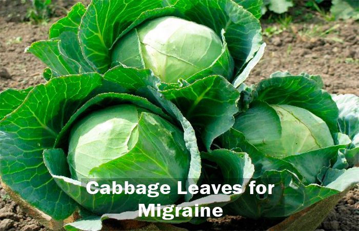 Cabbage-Leavesfor-Migraine