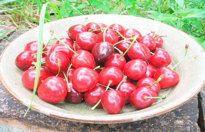 Cherry forknee joint pain