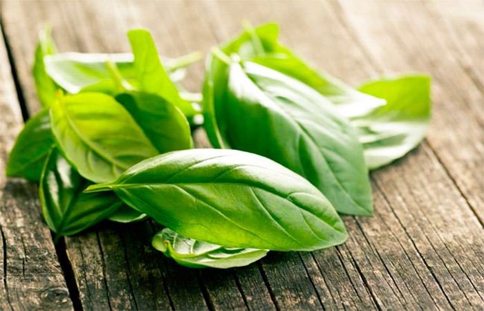 Basil Leaves for Back Pain