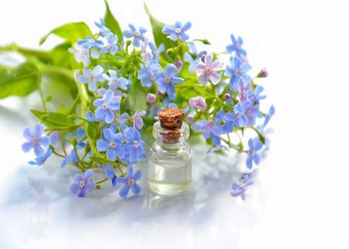 Lavender Oil for Body Pain