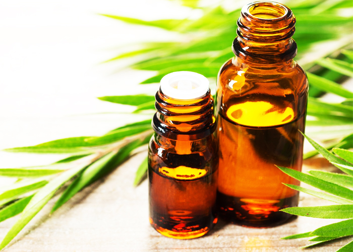 Tea-Tree-Essential-Oil-to-Get-Rid-of-Pimples