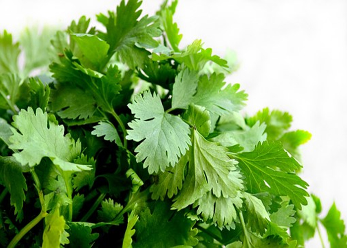 Parsley to Avoid Pregnancy