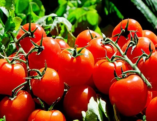 Tomatoes for Hair Growth