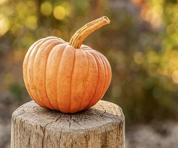 Pumpkin-to-Cure-Digestive-Problems